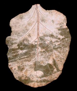 Leaf2_mini-1